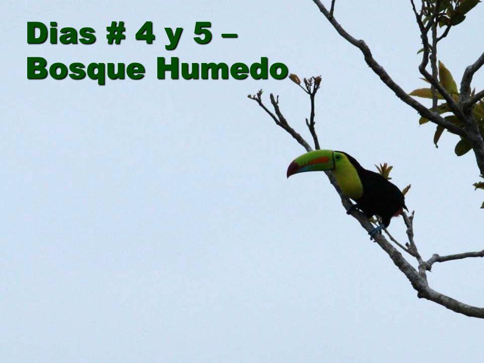 Dias # 4 y 5 – Bosque Humedo