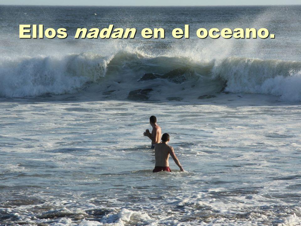 Ellos nadan en el oceano.