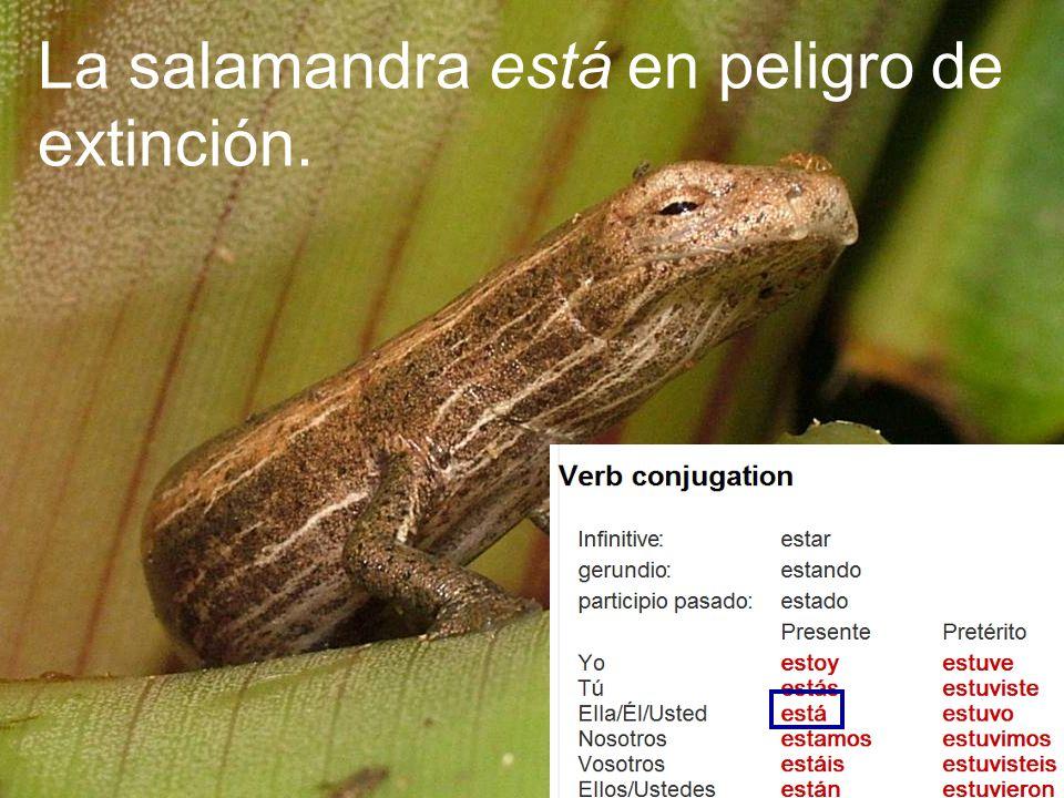 La salamandra está en peligro de extinción.