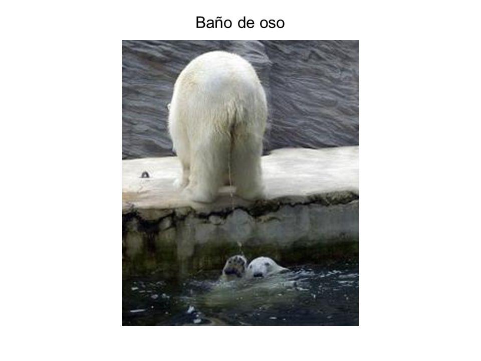 Baño de oso
