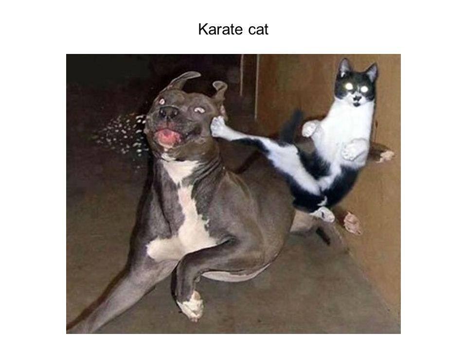 Karate cat