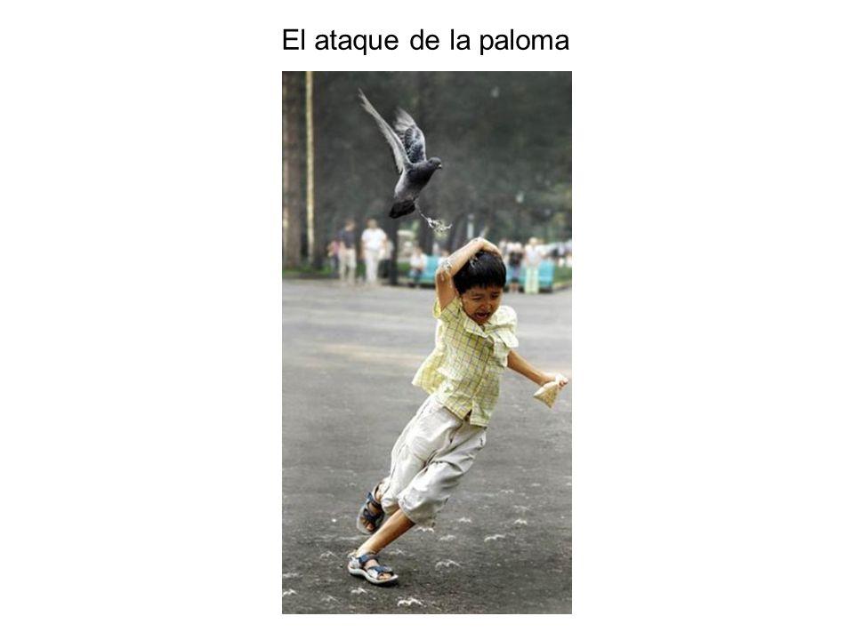 El ataque de la paloma