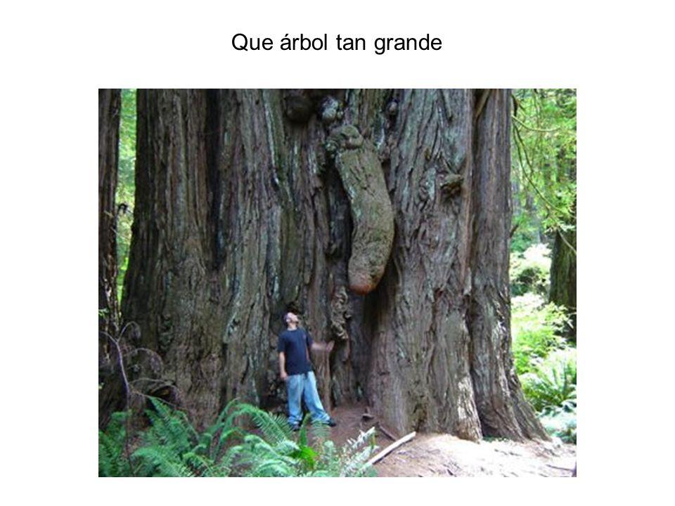 Que árbol tan grande