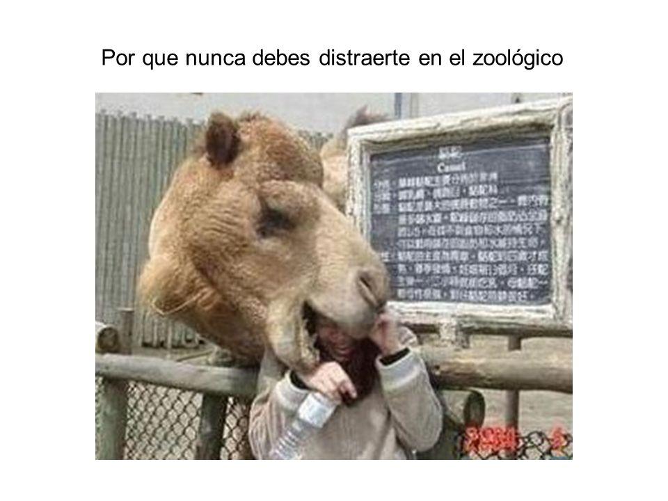 Por que nunca debes distraerte en el zoológico