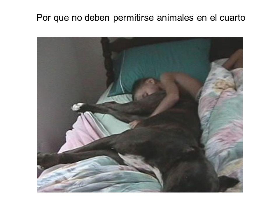Por que no deben permitirse animales en el cuarto