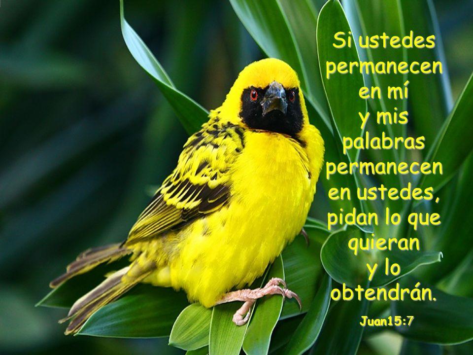 Es Él quien renueva fuerzas, esperanza y fe… y si Él cuida de un ave, imagina lo que hará por tí que eres su hijo amado…