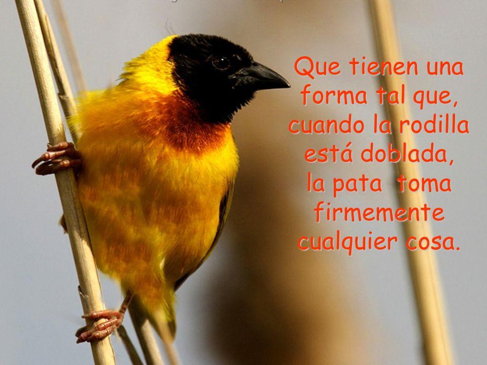 El secreto está en los tendones de las patas del pájaro