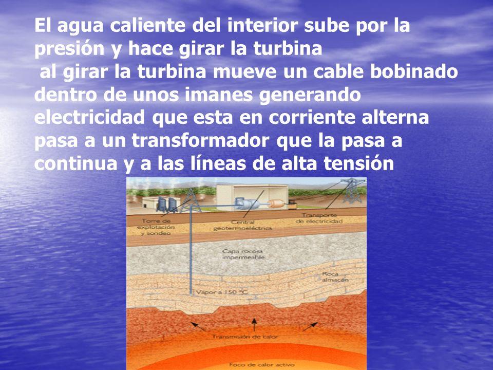 El agua caliente del interior sube por la presión y hace girar la turbina al girar la turbina mueve un cable bobinado dentro de unos imanes generando