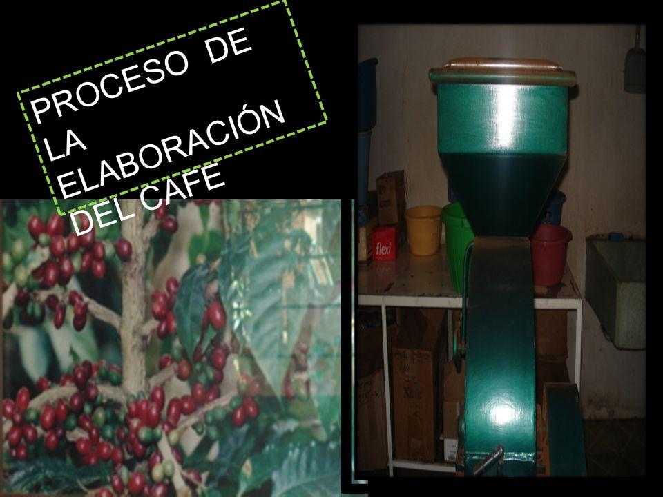 PROCESO DE LA ELABORACIÓN DEL CAFE