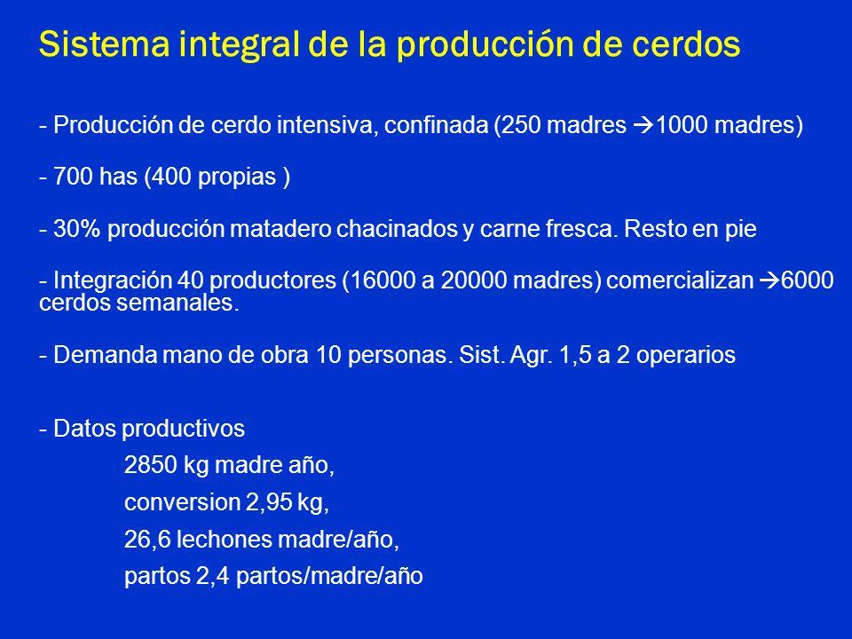 Sistema integral de la producción de cerdos - Producción de cerdo intensiva, confinada (250 madres 1000 madres) - 700 has (400 propias ) - 30% producc