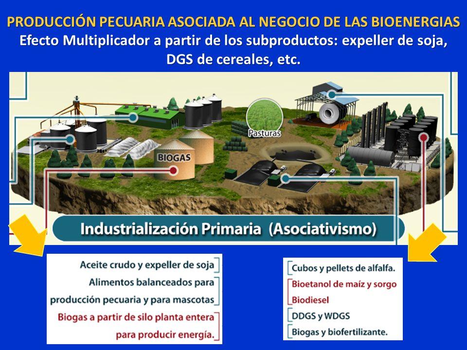 PRODUCCIÓN PECUARIA ASOCIADA AL NEGOCIO DE LAS BIOENERGIAS Efecto Multiplicador a partir de los subproductos: expeller de soja, DGS de cereales, etc.