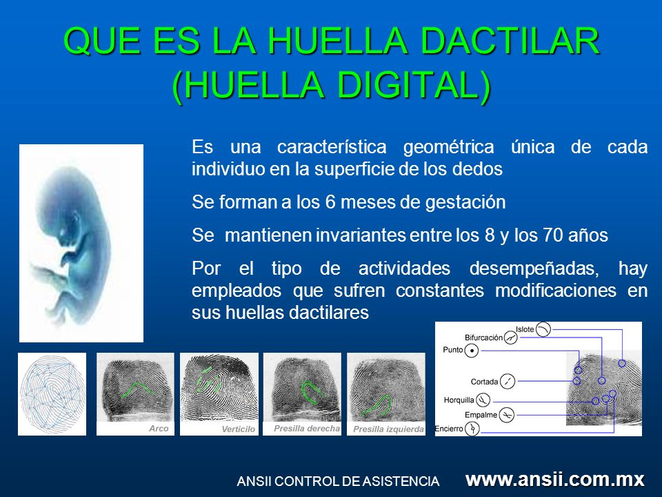 QUE ES LA HUELLA DACTILAR (HUELLA DIGITAL) Es una característica geométrica única de cada individuo en la superficie de los dedos Se forman a los 6 me