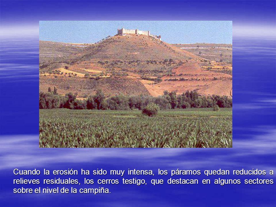 Cuando la erosión ha sido muy intensa, los páramos quedan reducidos a relieves residuales, los cerros testigo, que destacan en algunos sectores sobre el nivel de la campiña.