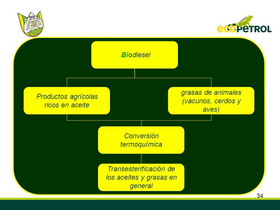 34 Biodiesel Productos agrícolas ricos en aceite grasas de animales (vacunos, cerdos y aves) Conversión termoquímica Transesterificación de los aceite