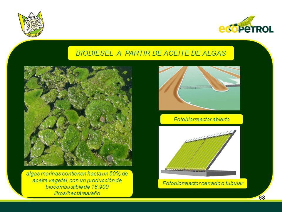 68 BIODIESEL A PARTIR DE ACEITE DE ALGAS algas marinas contienen hasta un 50% de aceite vegetal, con un producción de biocombustible de 18.900 litros/