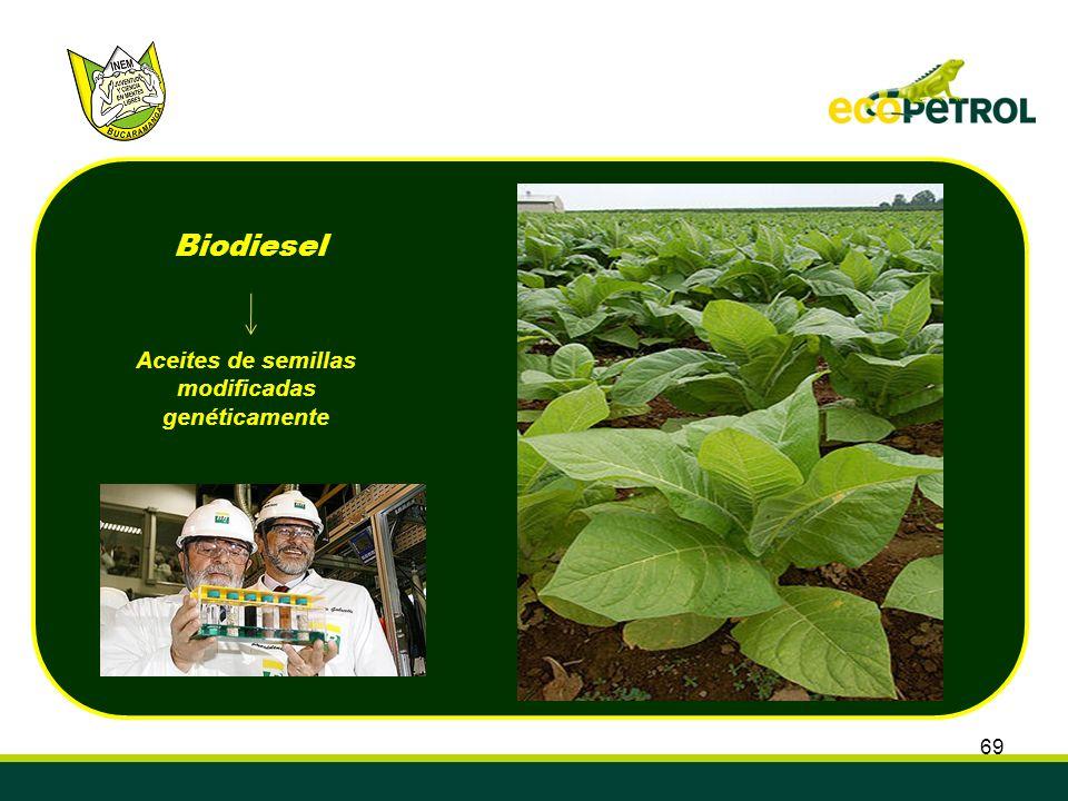 69 Aceites de semillas modificadas genéticamente Biodiesel