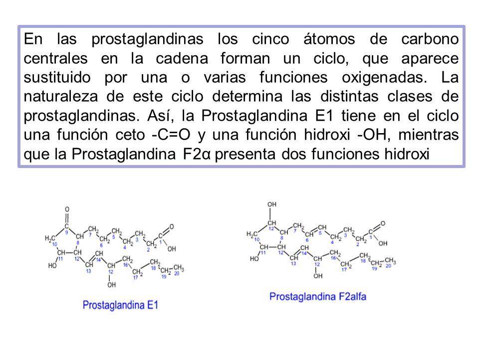 En las prostaglandinas los cinco átomos de carbono centrales en la cadena forman un ciclo, que aparece sustituido por una o varias funciones oxigenada