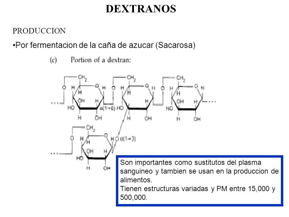 DEXTRANOS PRODUCCION Por fermentacion de la caña de azucar (Sacarosa) Son importantes como sustitutos del plasma sanguineo y tambien se usan en la pro