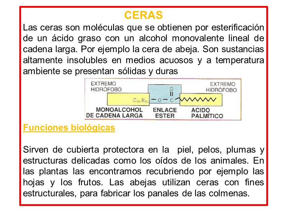CERAS Las ceras son moléculas que se obtienen por esterificación de un ácido graso con un alcohol monovalente lineal de cadena larga. Por ejemplo la c