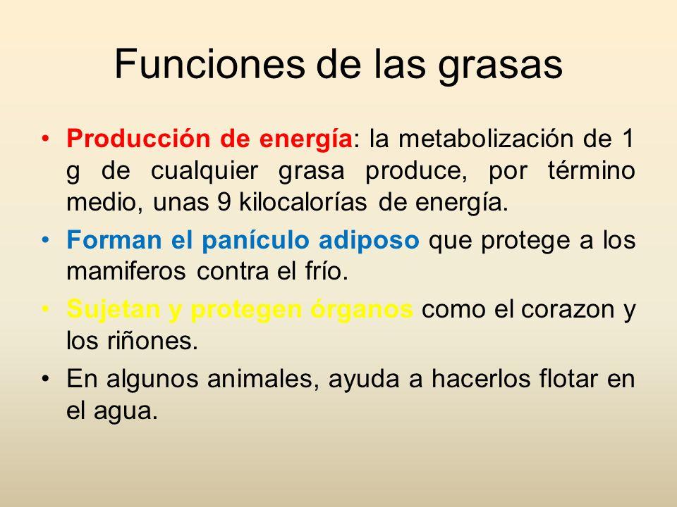 Funciones de las grasas Producción de energía: la metabolización de 1 g de cualquier grasa produce, por término medio, unas 9 kilocalorías de energía.