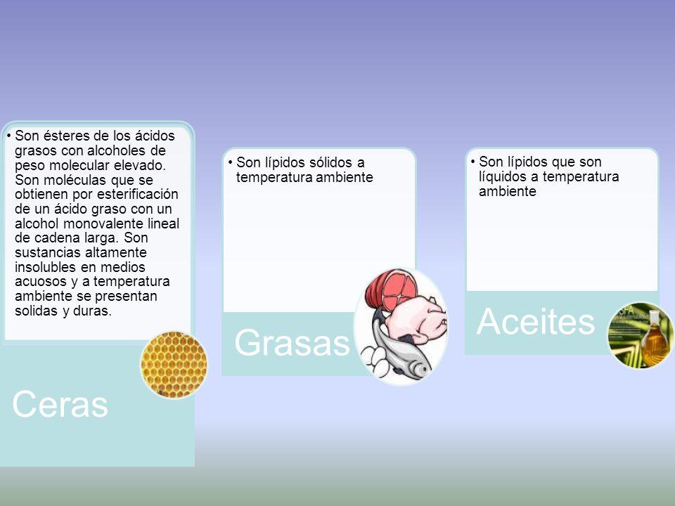 Son ésteres de los ácidos grasos con alcoholes de peso molecular elevado.