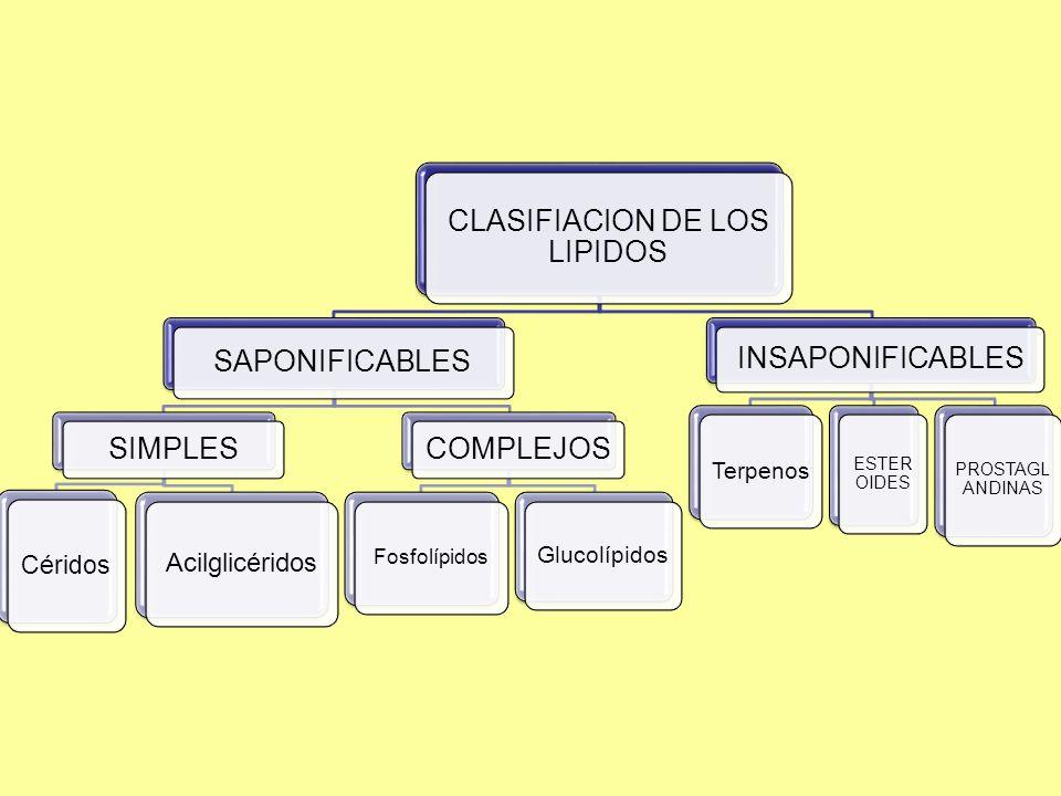 CLASIFIACION DE LOS LIPIDOS SAPONIFICABLES SIMPLES Céridos Acilglicéridos COMPLEJOS Fosfolípidos Glucolípidos INSAPONIFICABLES Terpenos ESTER OIDES PROSTAGL ANDINAS