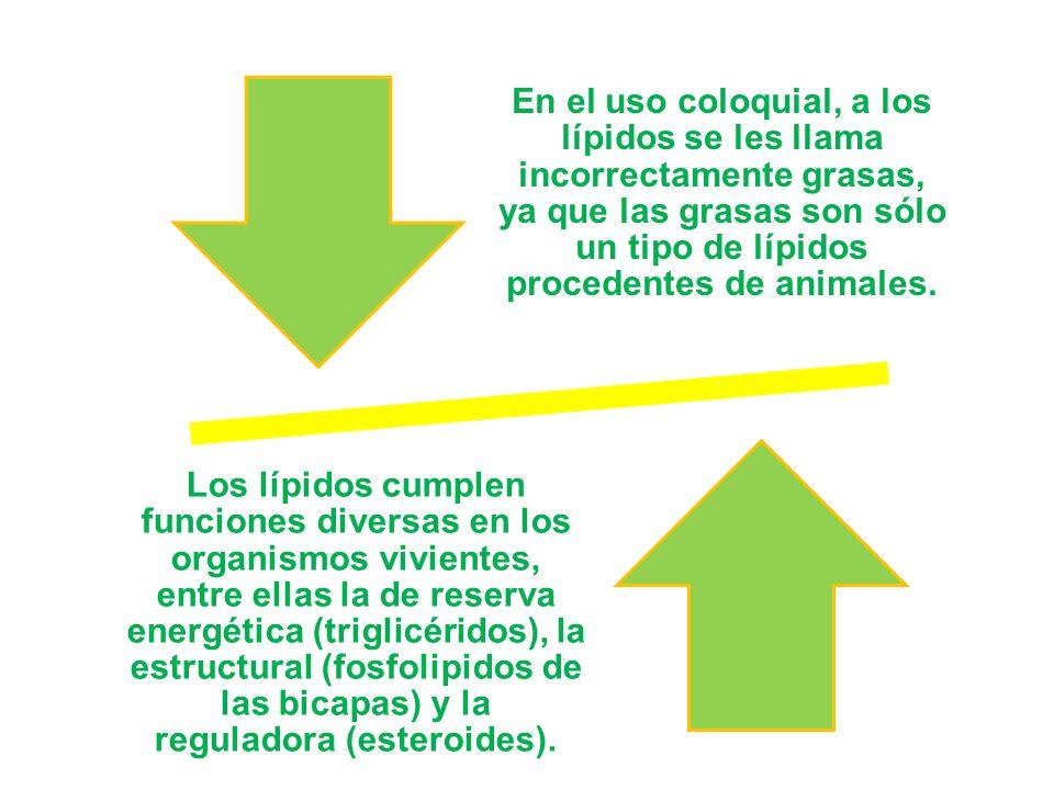 En el uso coloquial, a los lípidos se les llama incorrectamente grasas, ya que las grasas son sólo un tipo de lípidos procedentes de animales.