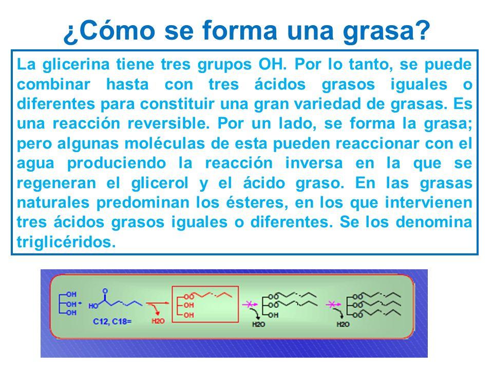 ¿Cómo se forma una grasa? La glicerina tiene tres grupos OH. Por lo tanto, se puede combinar hasta con tres ácidos grasos iguales o diferentes para co