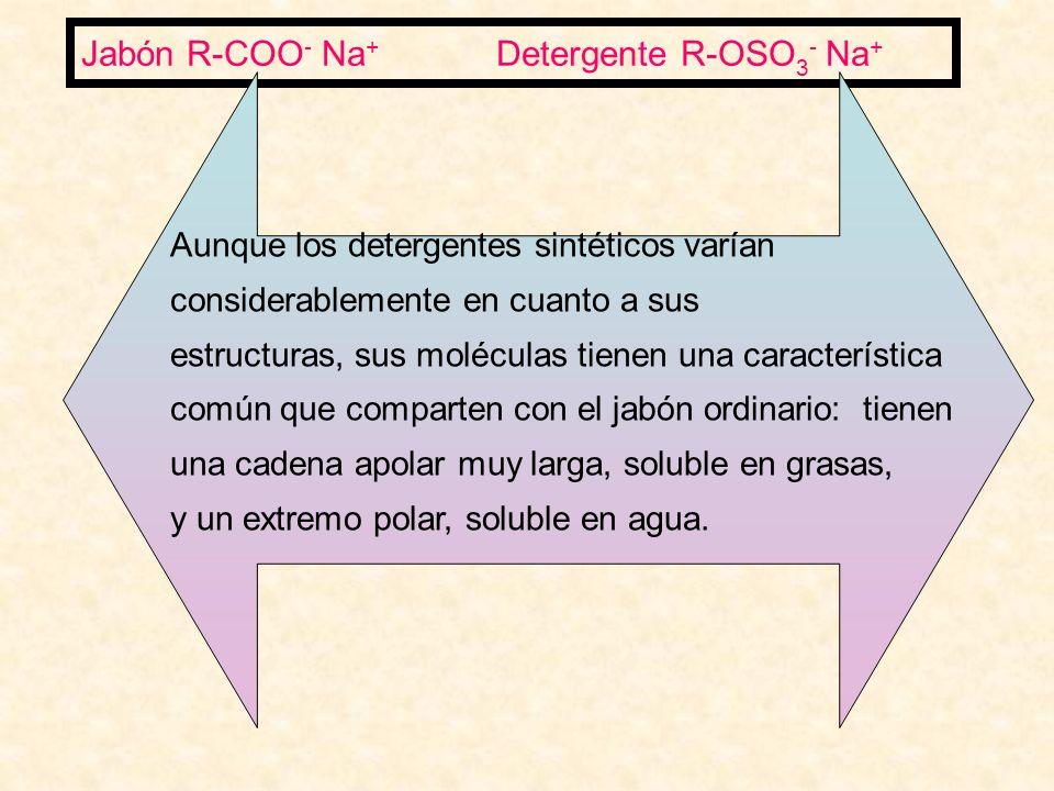 Jabón R-COO - Na + Detergente R-OSO 3 - Na + Aunque los detergentes sintéticos varían considerablemente en cuanto a sus estructuras, sus moléculas tienen una característica común que comparten con el jabón ordinario: tienen una cadena apolar muy larga, soluble en grasas, y un extremo polar, soluble en agua.