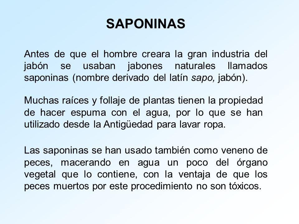 SAPONINAS Antes de que el hombre creara la gran industria del jabón se usaban jabones naturales llamados saponinas (nombre derivado del latín sapo, ja