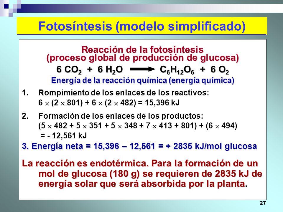27 Fotosíntesis (modelo simplificado) Reacción de la fotosíntesis (proceso global de producción de glucosa) 6 CO 2 + 6 H 2 O C 6 H 12 O 6 + 6 O 2 Ener