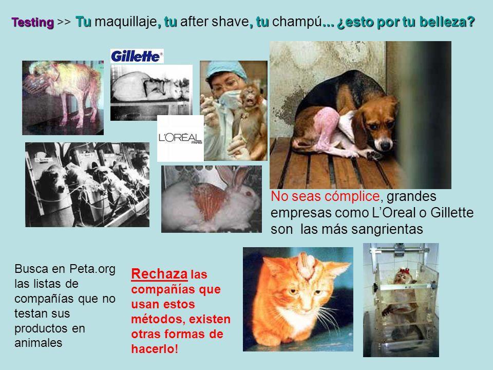 Cuero >>Todo tipo de animales, incluso perros y gatos (gratis y abundantes), en países como China, dónde los animales son maltratados abiertamente, exportan la piel de estos animales para cuero.