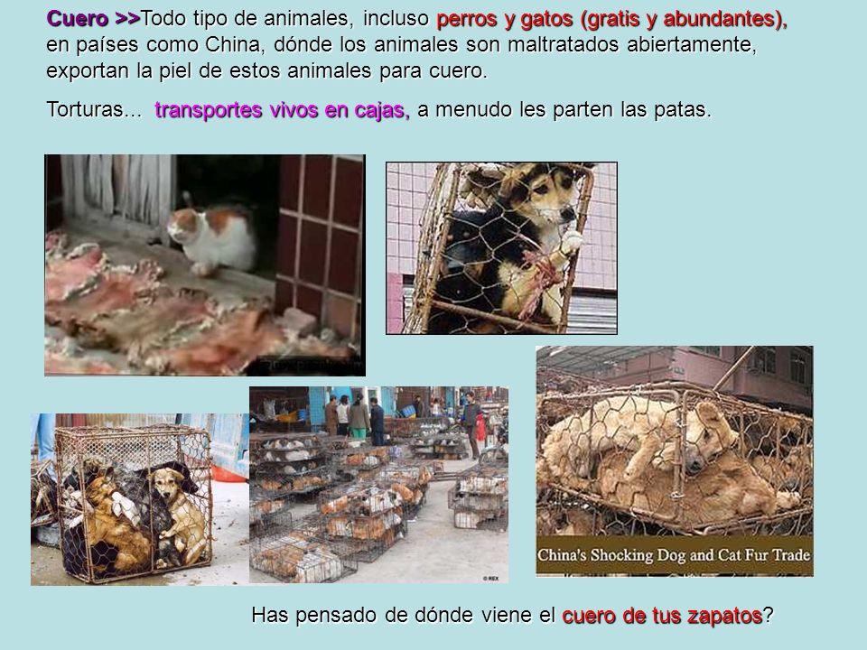 Cuero >>Todo tipo de animales, incluso perros y gatos (gratis y abundantes), en países como China, dónde los animales son maltratados abiertamente, ex
