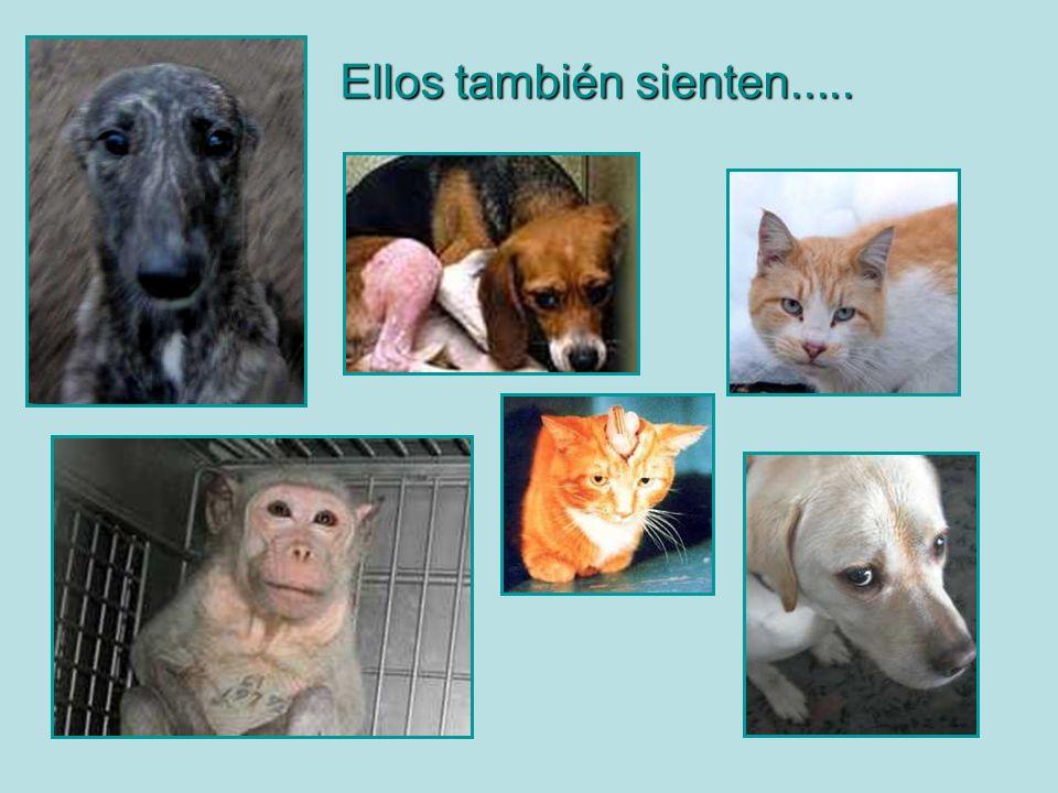 Mucha gente dedica su vida a ayudar y salvar a estos animales, Pero toda ayuda es poca...