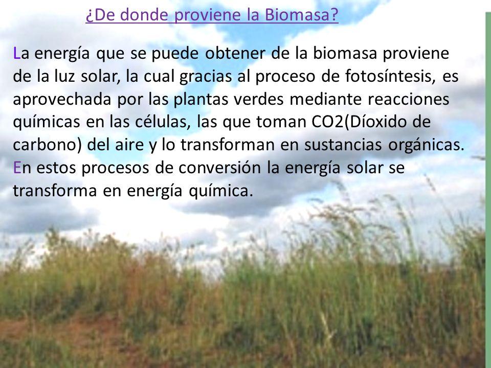 La energía que se puede obtener de la biomasa proviene de la luz solar, la cual gracias al proceso de fotosíntesis, es aprovechada por las plantas verdes mediante reacciones químicas en las células, las que toman CO2(Díoxido de carbono) del aire y lo transforman en sustancias orgánicas.