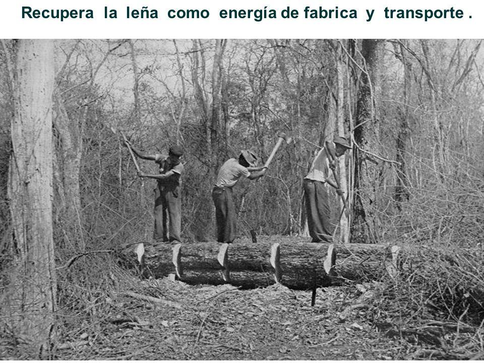 Año 1916, Tabacal inicia sus actividades, desmonta para las plantaciones de caña.