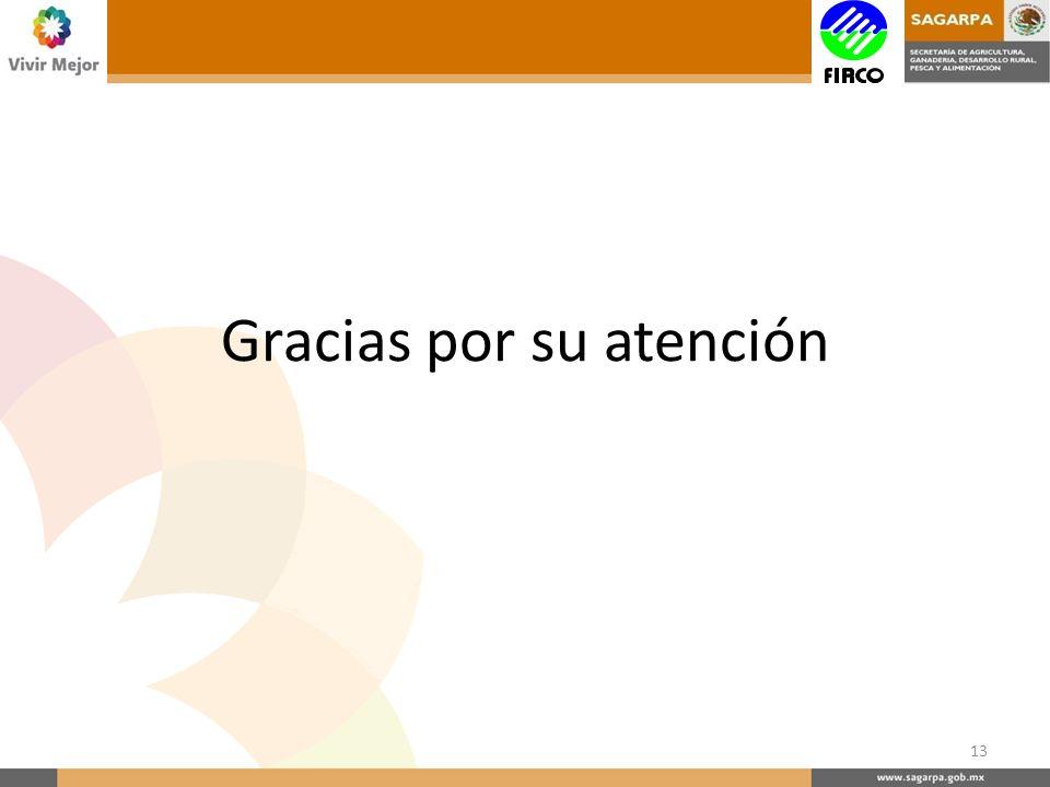 Gracias por su atención 13