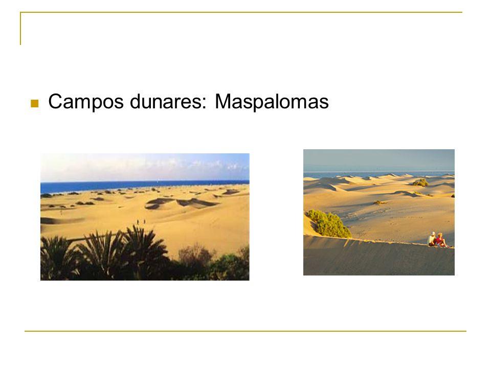 Campos dunares: Maspalomas