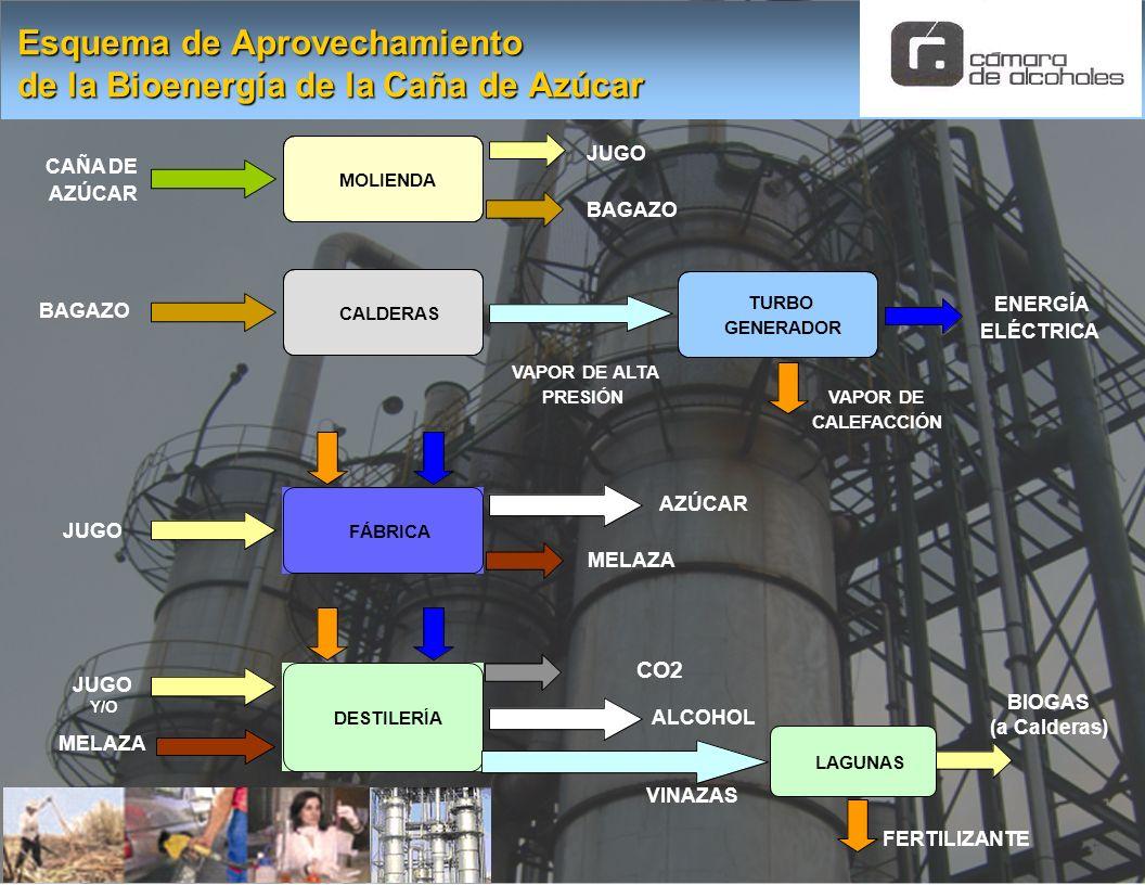 Esquema de Aprovechamiento de la Bioenergía de la Caña de Azúcar MOLIENDA JUGO BAGAZO CALDERAS VAPOR DE ALTA PRESIÓN ENERGÍA ELÉCTRICA TURBO GENERADOR