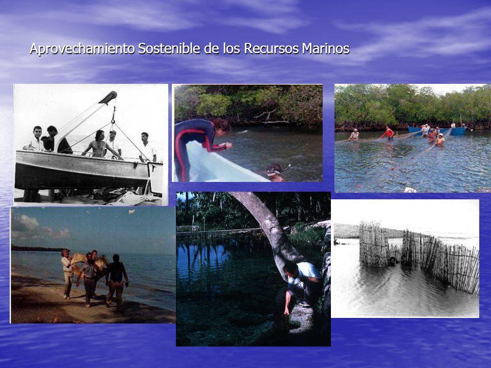 Desarrollo de la región costero marina De esta forma, los ecosistemas se hacen m á s escasos.