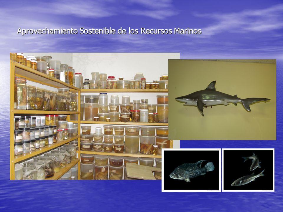 Desde entonces se trabaja en esos asuntos y en la década del 1990, el CIBIMA: Compila los resultados de investigaciones sobre la biodiversidad y publica el libro Estudio preliminar sobre la biodiversidad costera y marina de la República Dominicana.