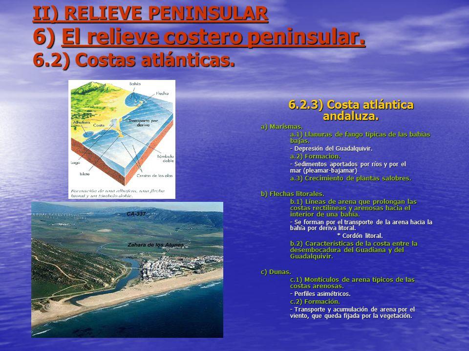 II) RELIEVE PENINSULAR 6) El relieve costero peninsular. 6.2) Costas atlánticas. 6.2.3) Costa atlántica andaluza. a) Marismas. a.1) Llanuras de fango