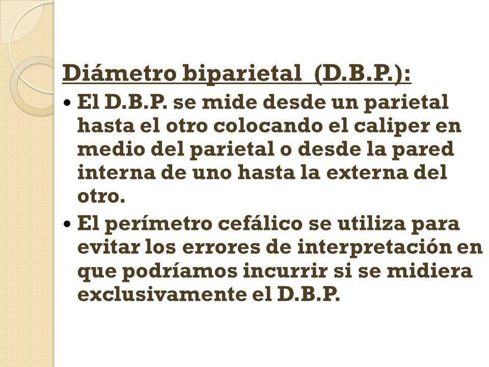 Diámetro biparietal (D.B.P.): El D.B.P. se mide desde un parietal hasta el otro colocando el caliper en medio del parietal o desde la pared interna de