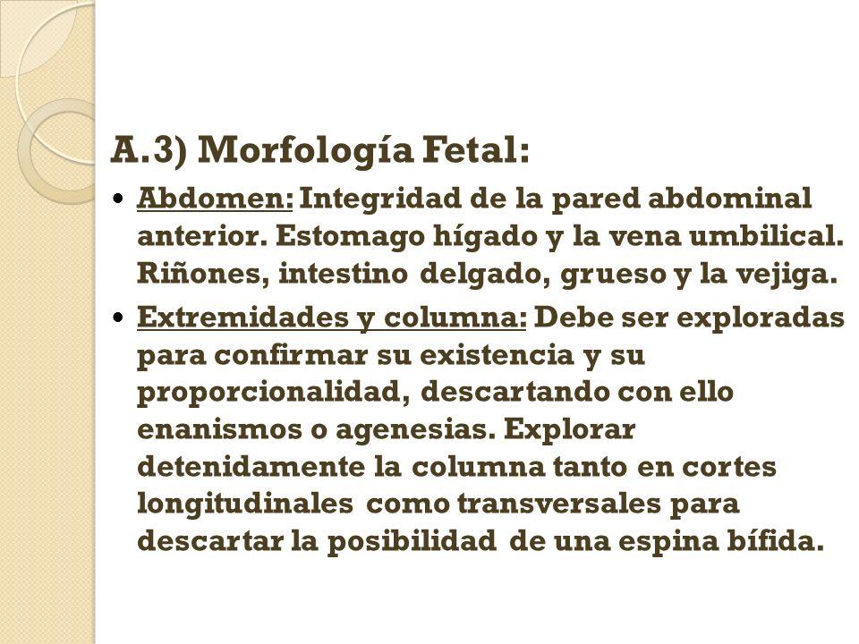A.3) Morfología Fetal: Abdomen: Integridad de la pared abdominal anterior. Estomago hígado y la vena umbilical. Riñones, intestino delgado, grueso y l