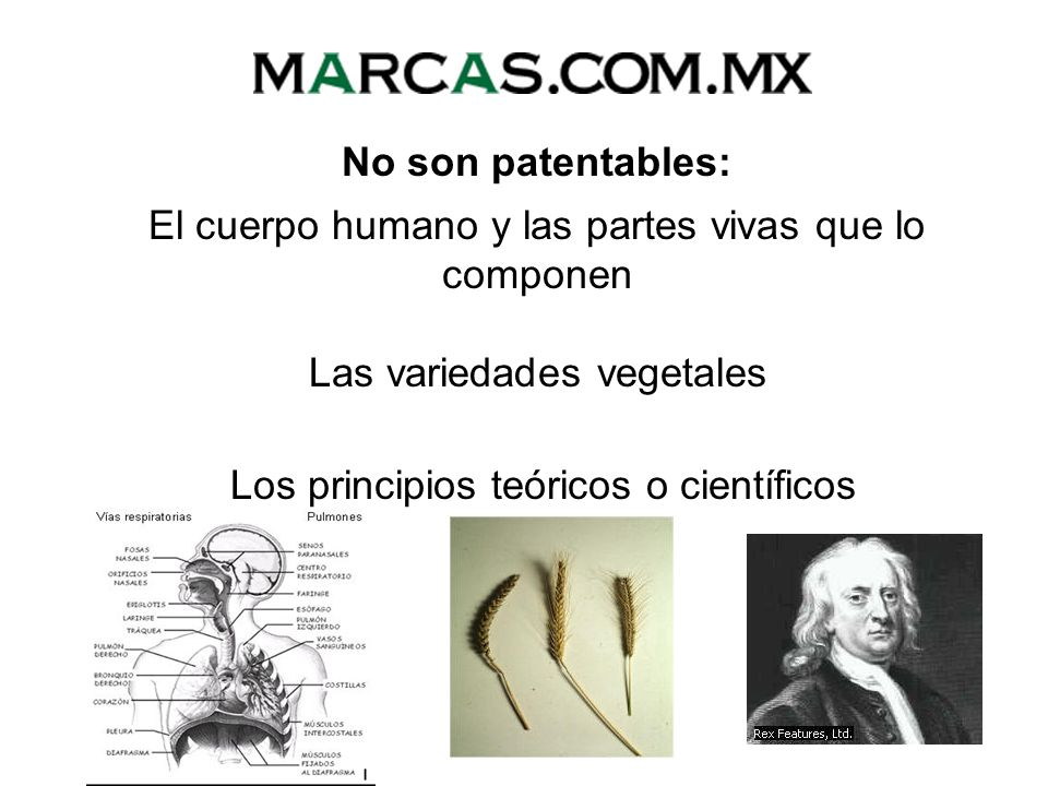 No son patentables: Los procesos esencialmente biológicos para la producción, reproducción y propagación de plantas y animales El material biológico y genético tal como se encuentran en la naturaleza Las razas animales