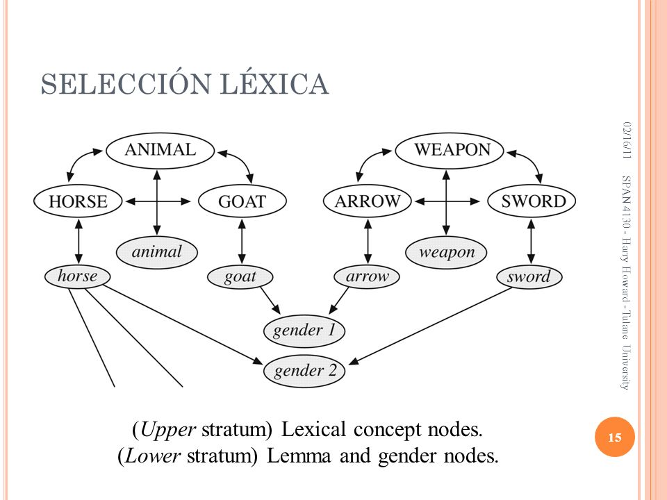 SELECCIÓN LÉXICA 02/16/11 15 SPAN 4130 - Harry Howard - Tulane University (Upper stratum) Lexical concept nodes.