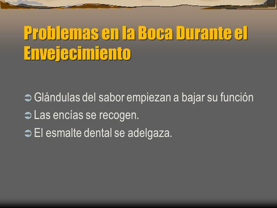 Problemas en la Boca Durante el Envejecimiento Glándulas del sabor empiezan a bajar su función Las encías se recogen. El esmalte dental se adelgaza.