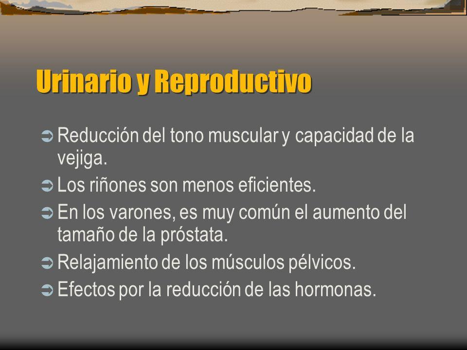Urinario y Reproductivo Reducción del tono muscular y capacidad de la vejiga. Los riñones son menos eficientes. En los varones, es muy común el aument