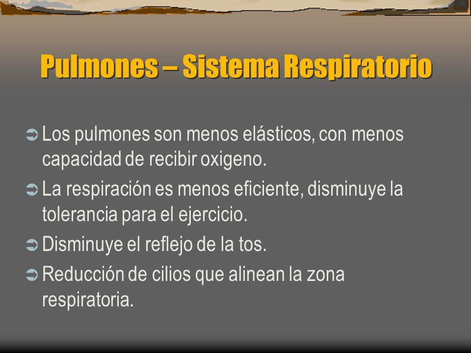 Pulmones – Sistema Respiratorio Los pulmones son menos elásticos, con menos capacidad de recibir oxigeno. La respiración es menos eficiente, disminuye