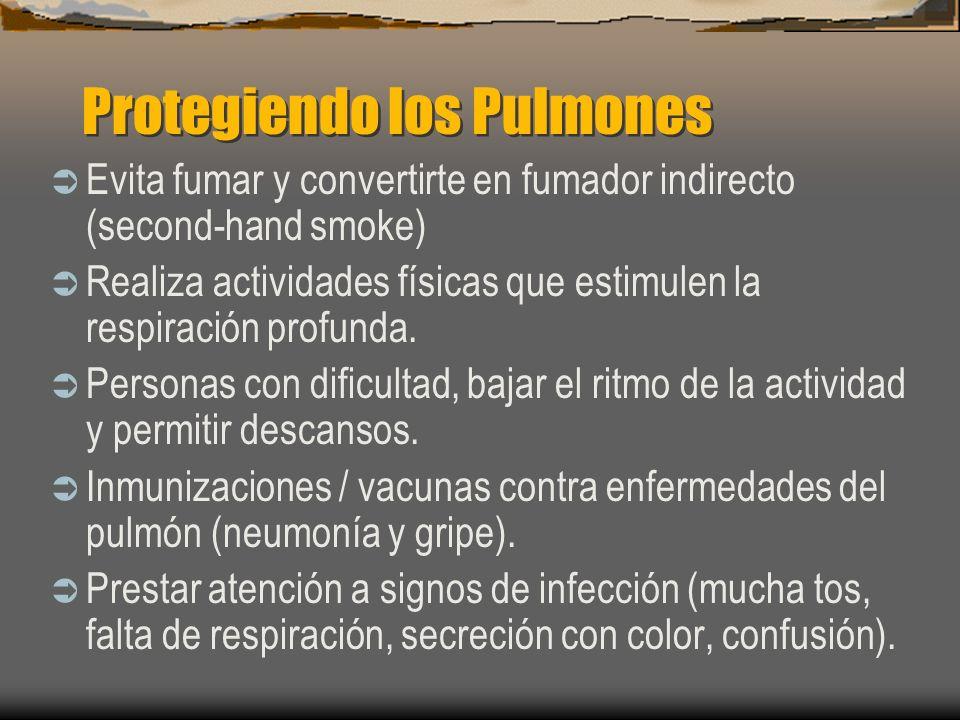 Protegiendo los Pulmones Evita fumar y convertirte en fumador indirecto (second-hand smoke) Realiza actividades físicas que estimulen la respiración p